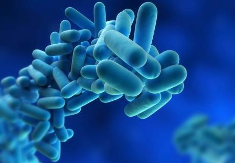 Legionella Knowledge Base